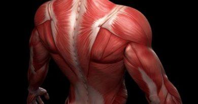 Комплекс для спины Топ 5 лучших упражнений для дома